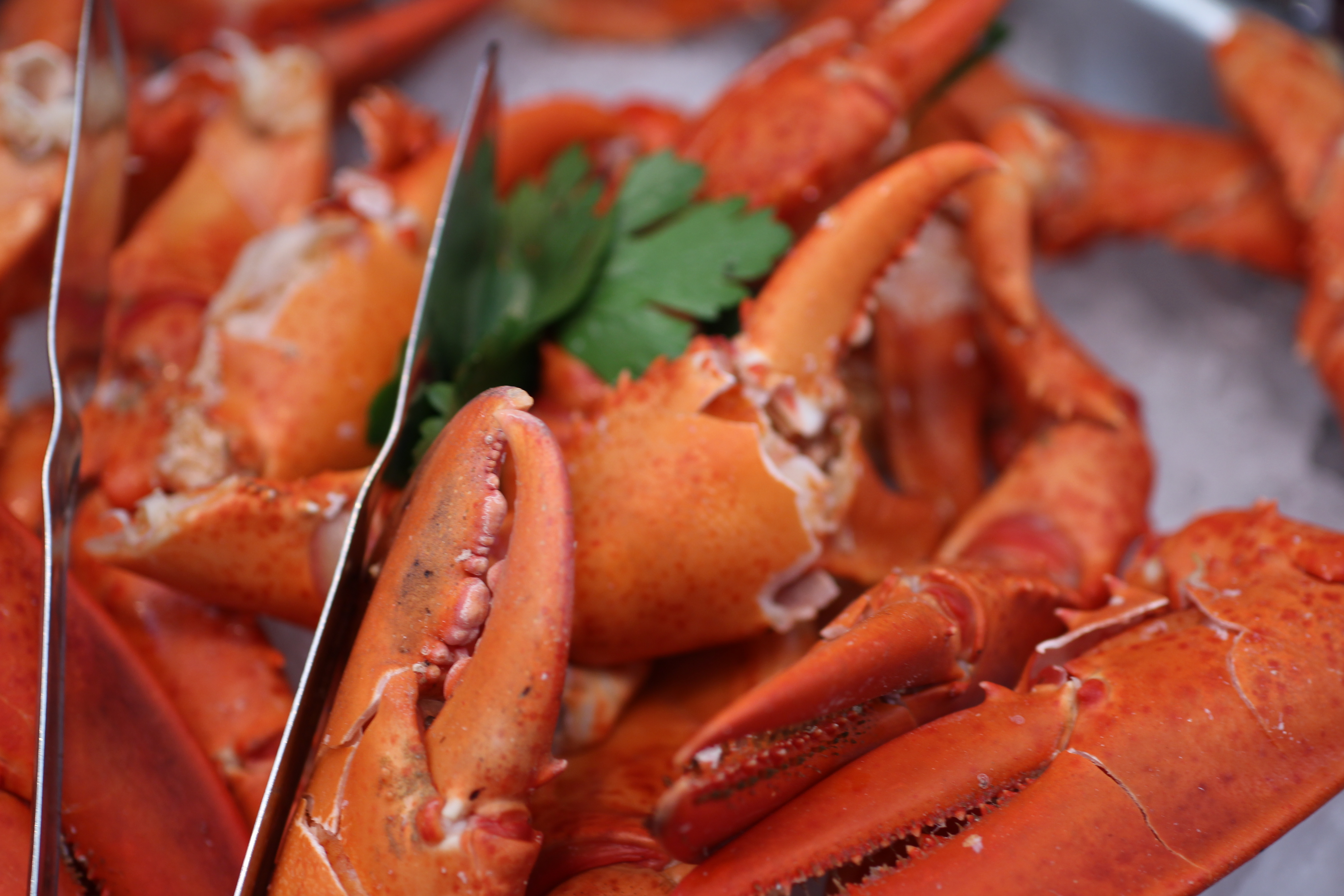 Shaw's Crab House Grand Crab and Lobster Buffet – Felt Like a Foodie