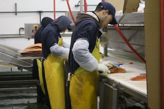 Salmon being processed for a restaurant order.