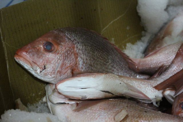 One of my favorites, Red Snapper.  (I think I ate one of his cousins on Saturday.)